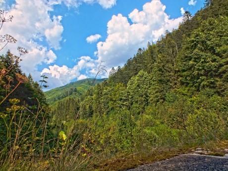 pohled na lesy Nízkych Tater