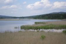 Пруд Долейши (Нижний пруд)