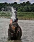 koupel se slony v řece Rapti