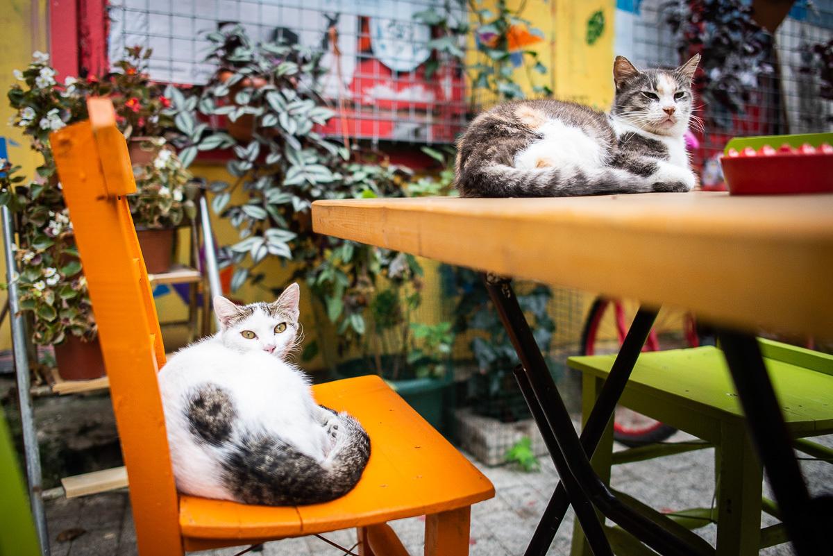 на каждом углу кошки