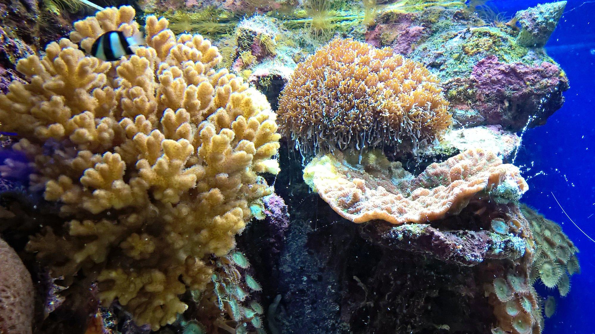 underwater world in aquarium