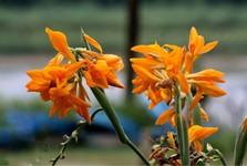 В Дамане полно красочных цветов