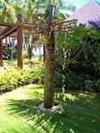 dřevěné sochy jsou ukázkou umění místních domorodců