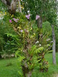 Orchid Flower Stream