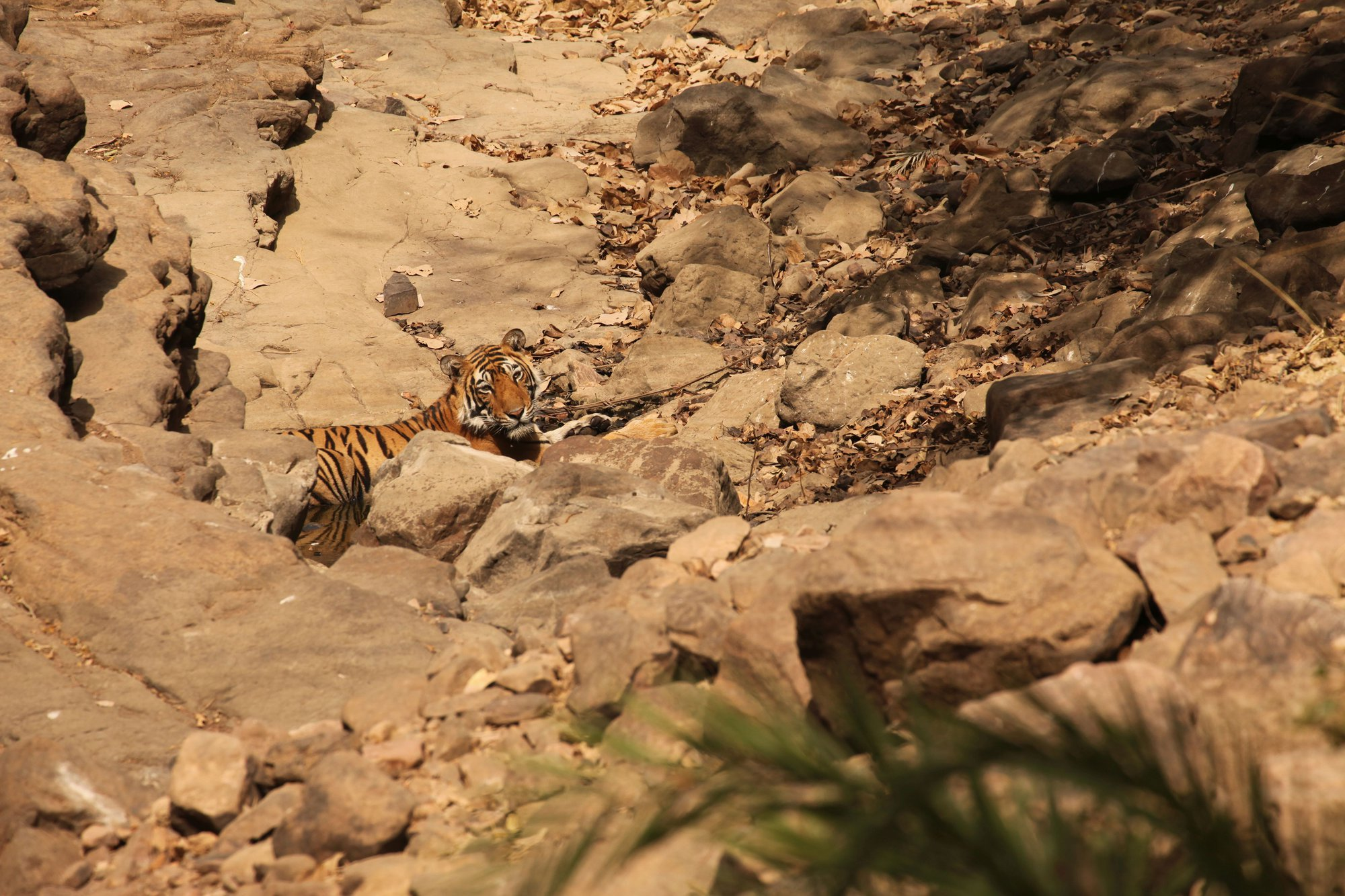 naším hlavním cílem byli tygři