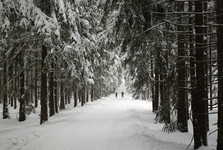 лесная дорога Буршовская