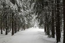 Bursovska forest path