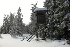 a tree stand on Tok impact area