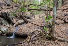 cesta k vodopádům Huai Lao