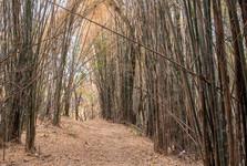 bambusová džungle