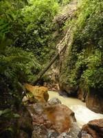 řeka protékající džunglí