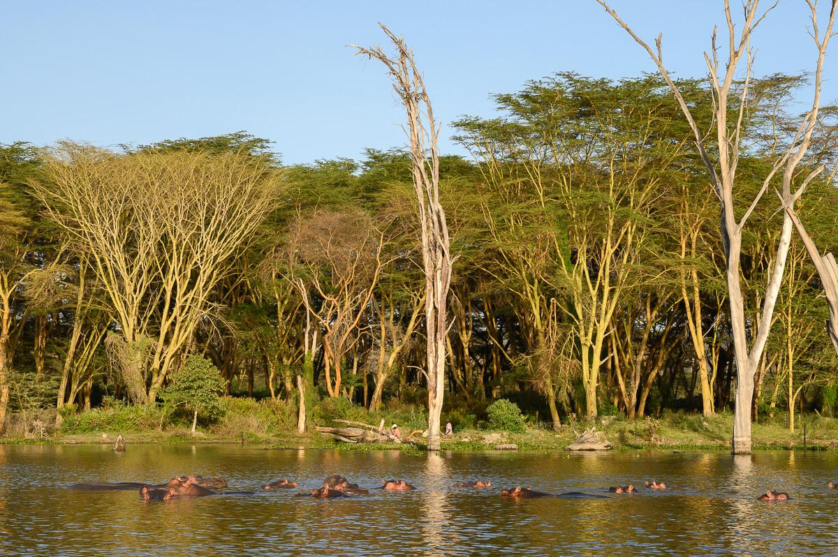 hrochy –najväčšia atrakcia jazera