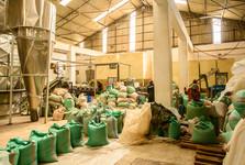 továrna na zpracování čaje