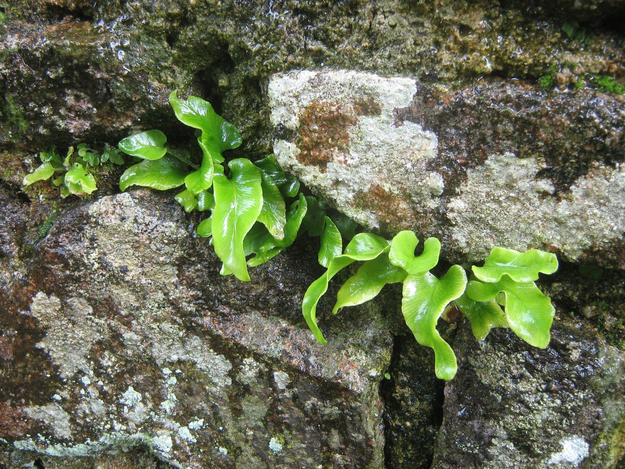 bretónske pamiatky sú nerozlučne späté s všadeprítomnou prírodou