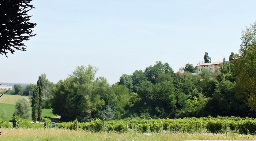 vinice Ariola (Casale del Groppone)
