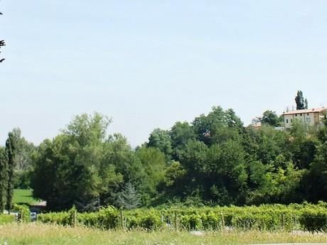 vinica Ariola (Casale del Groppone)