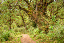 лес в нижших районах парка