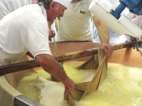 miešanie mlieka, výroba parmezánu (Lesignano de Bagni)