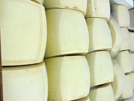 namáčanie, výroba parmezánu (Lesignano de Bagni)