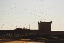 flocks of seagulls