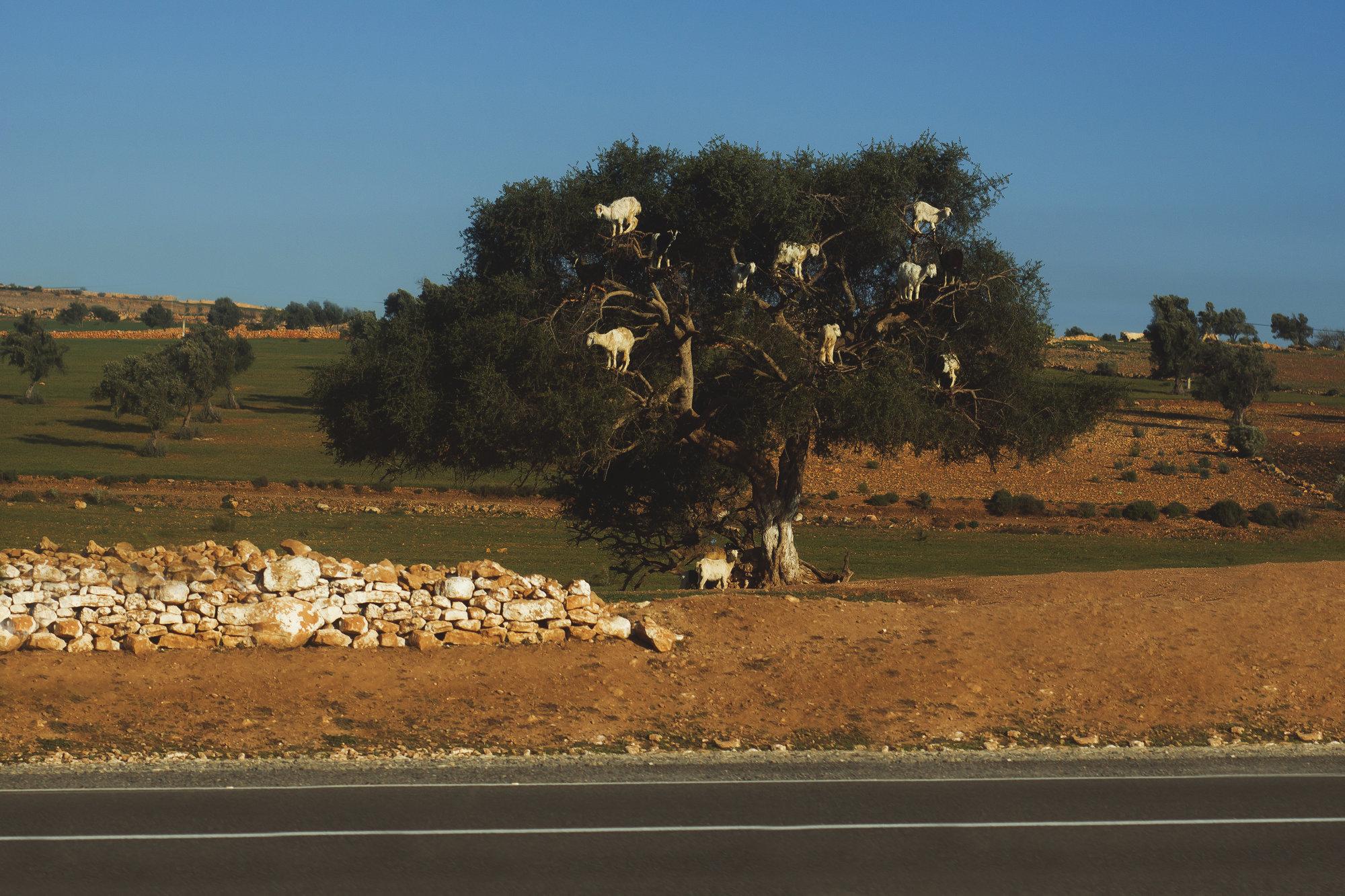 kozy na stromoch sú miestnou atrakciou