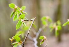 křivoklátské lesy jsou z většiny listnaté
