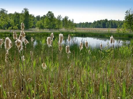 přírodní rezervace Soos, www.kvpoint.cz - databanka fotografií Karlovarského kraje