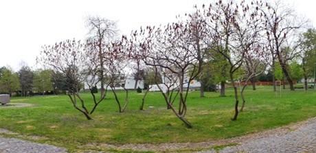 park pri hvezdárni (Hurbanovo)