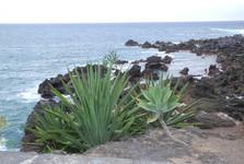 coastline with lava stones