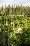 vichřicí poničený les