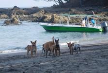 psi na pláži