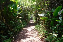 a walk in Tortuguero National Park