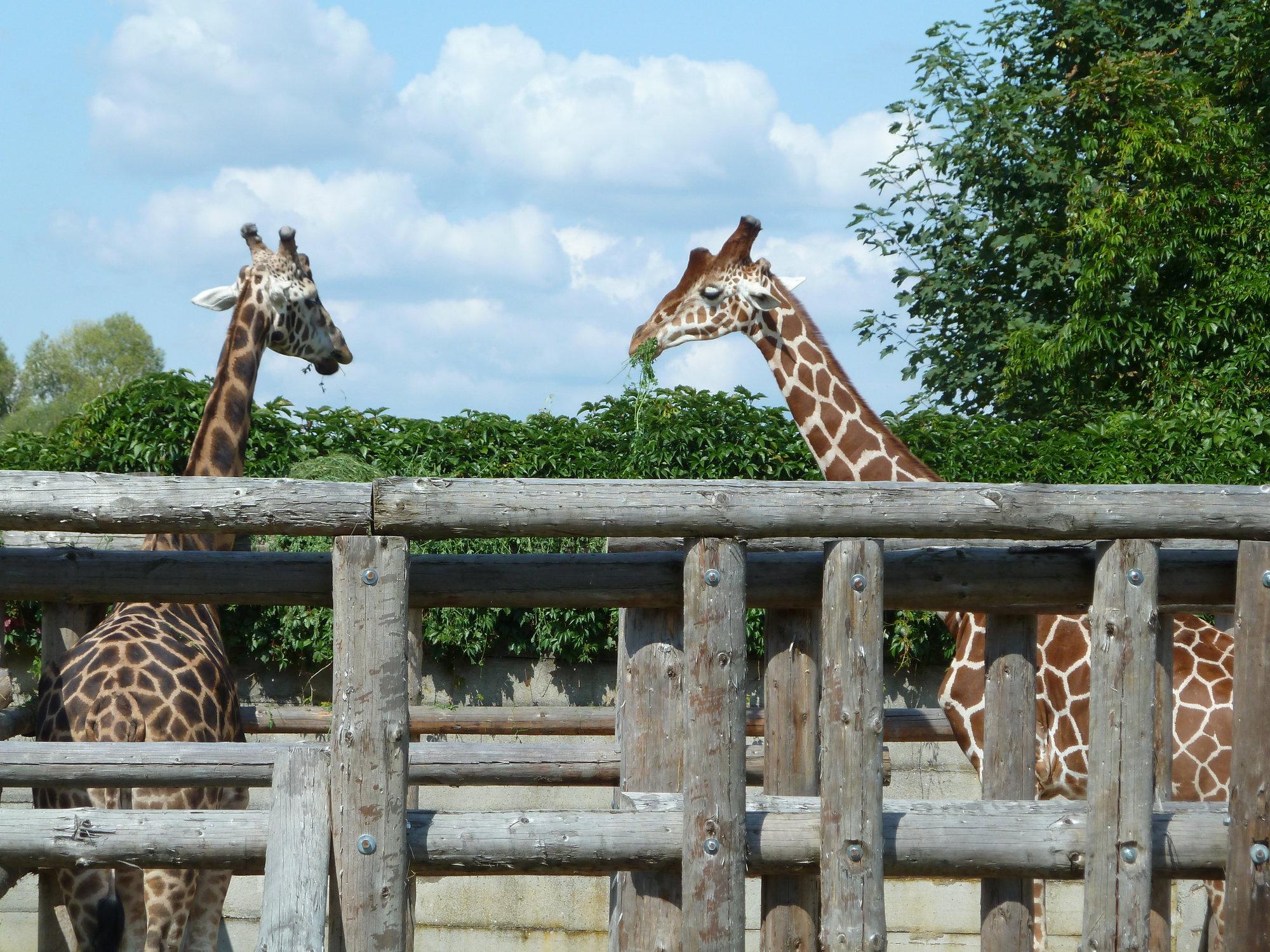 zoo a safari Dvůr Králové n/L