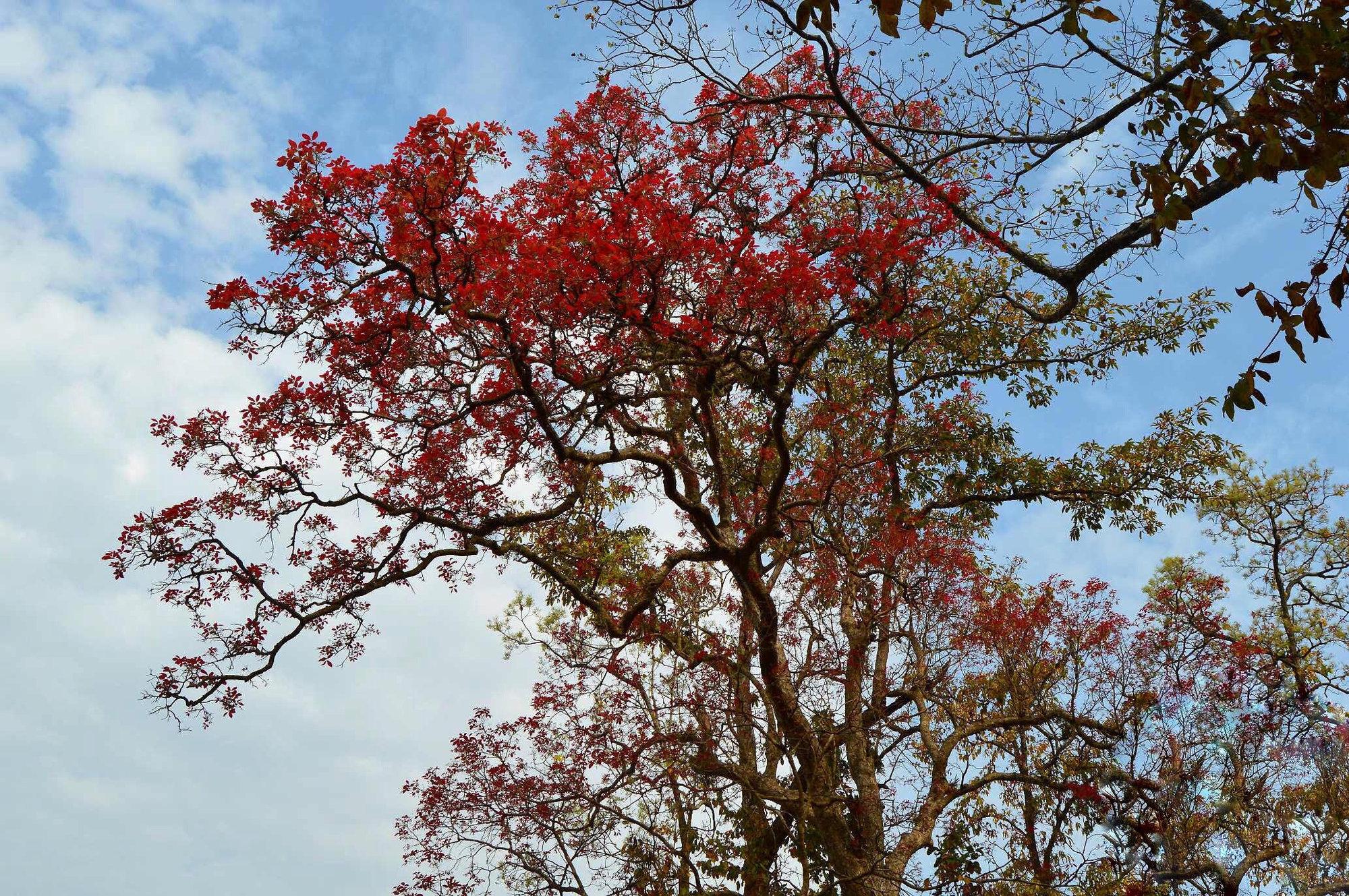 цветущие деревья в национальном парке
