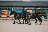 Nestville Horses