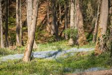 nezábudky v údolí Bobrůvky