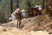 zásoby jsou vynášeny na zádech oslů a jaků