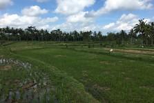 обрабатывание рисовых полей - это тяжелый труд