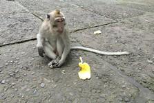 Monkey Forest v Ubudu