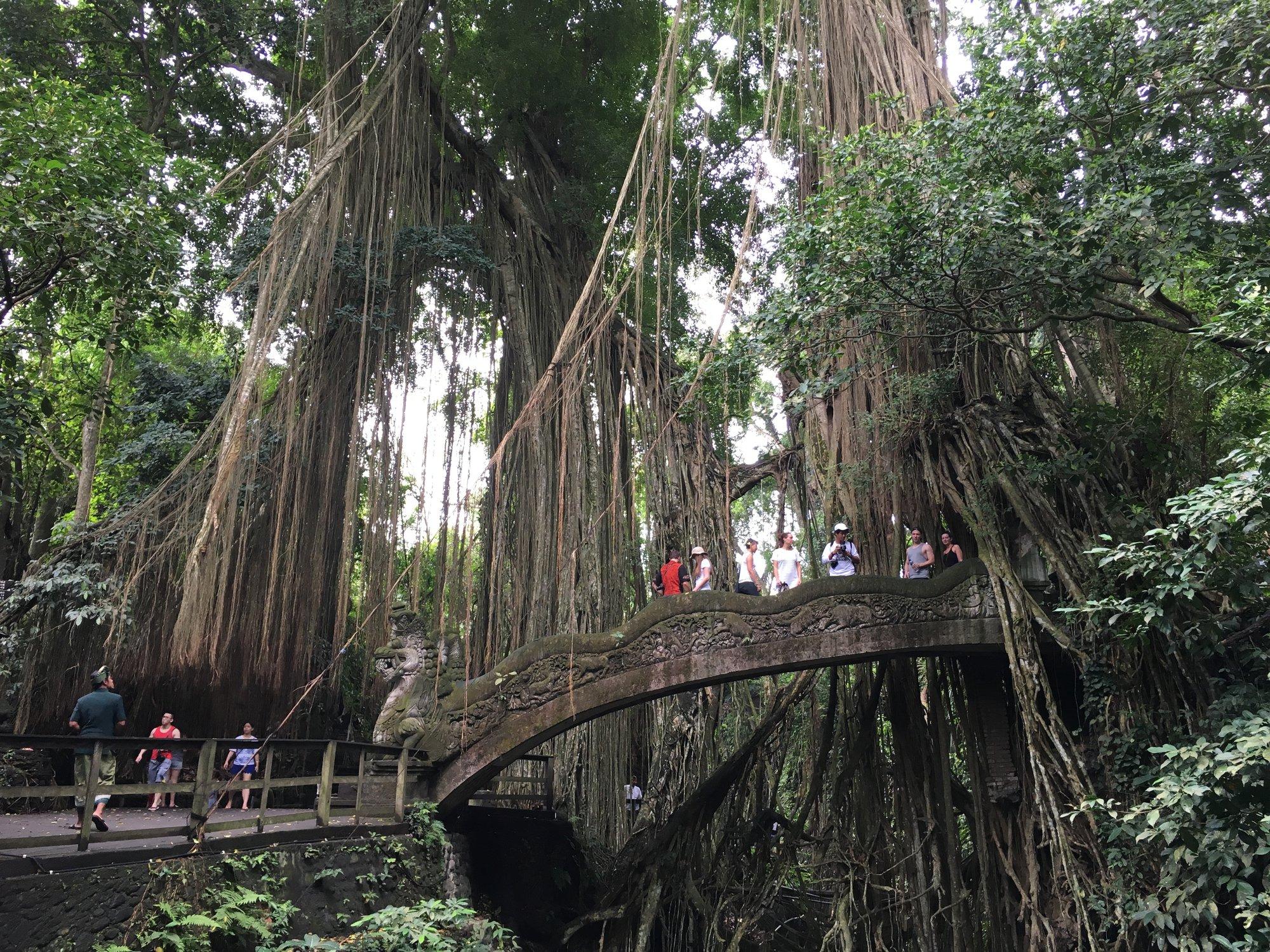 Monkey Forest skrývá spoustu magických zákoutí