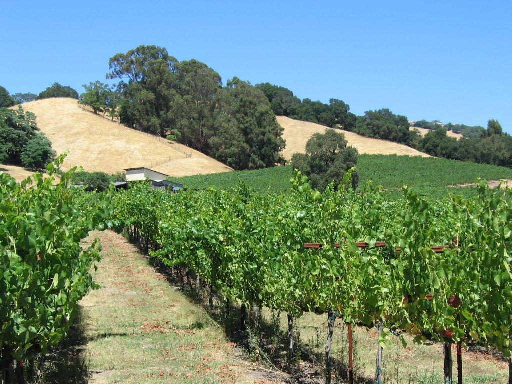 Виноградники Санта-Роза