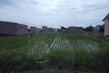 rýžové pole cestou do Medanu