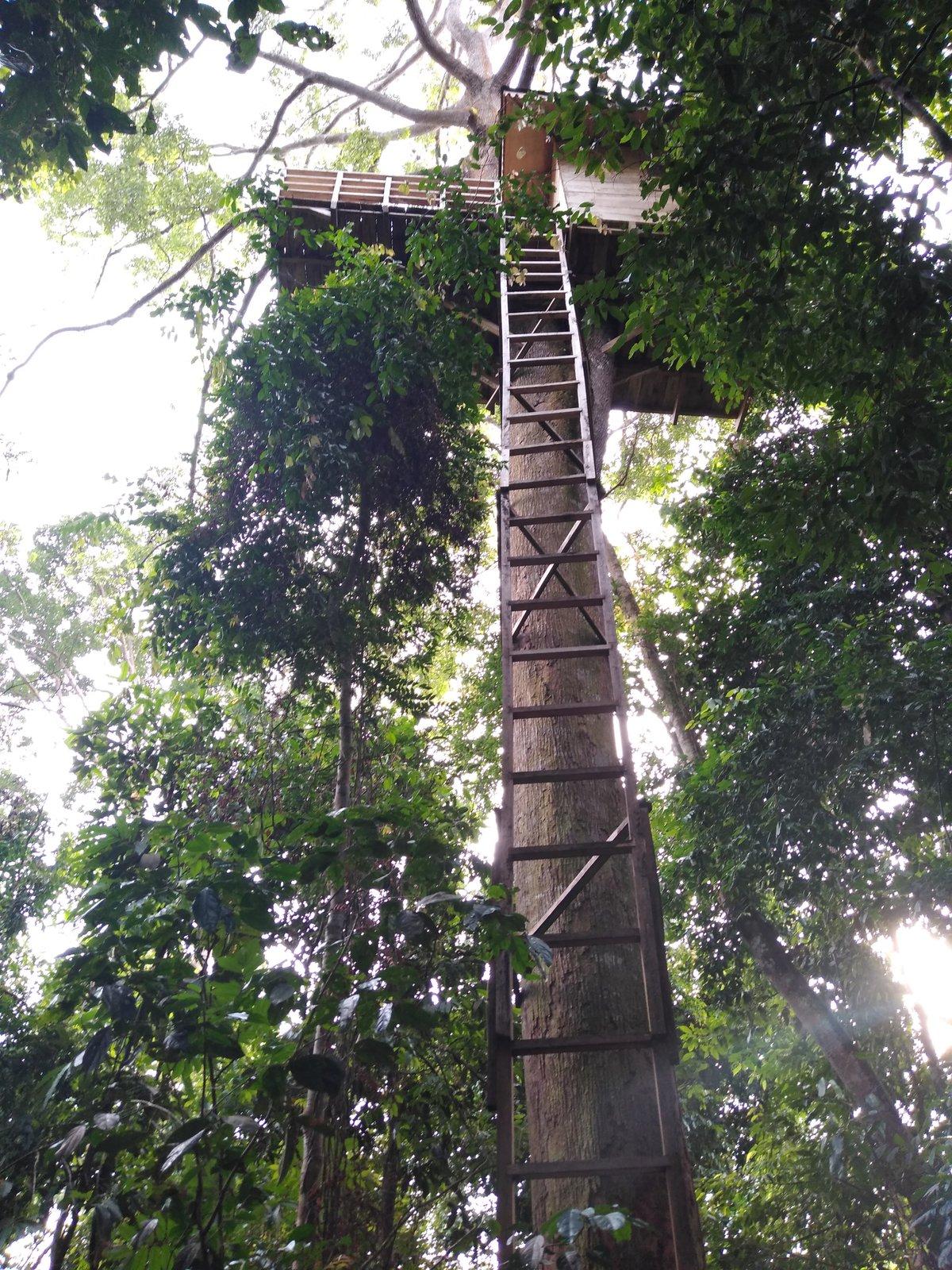 príbytok v džungli