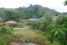Bukit Lawang