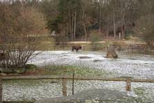 зоопарк, загон зубров