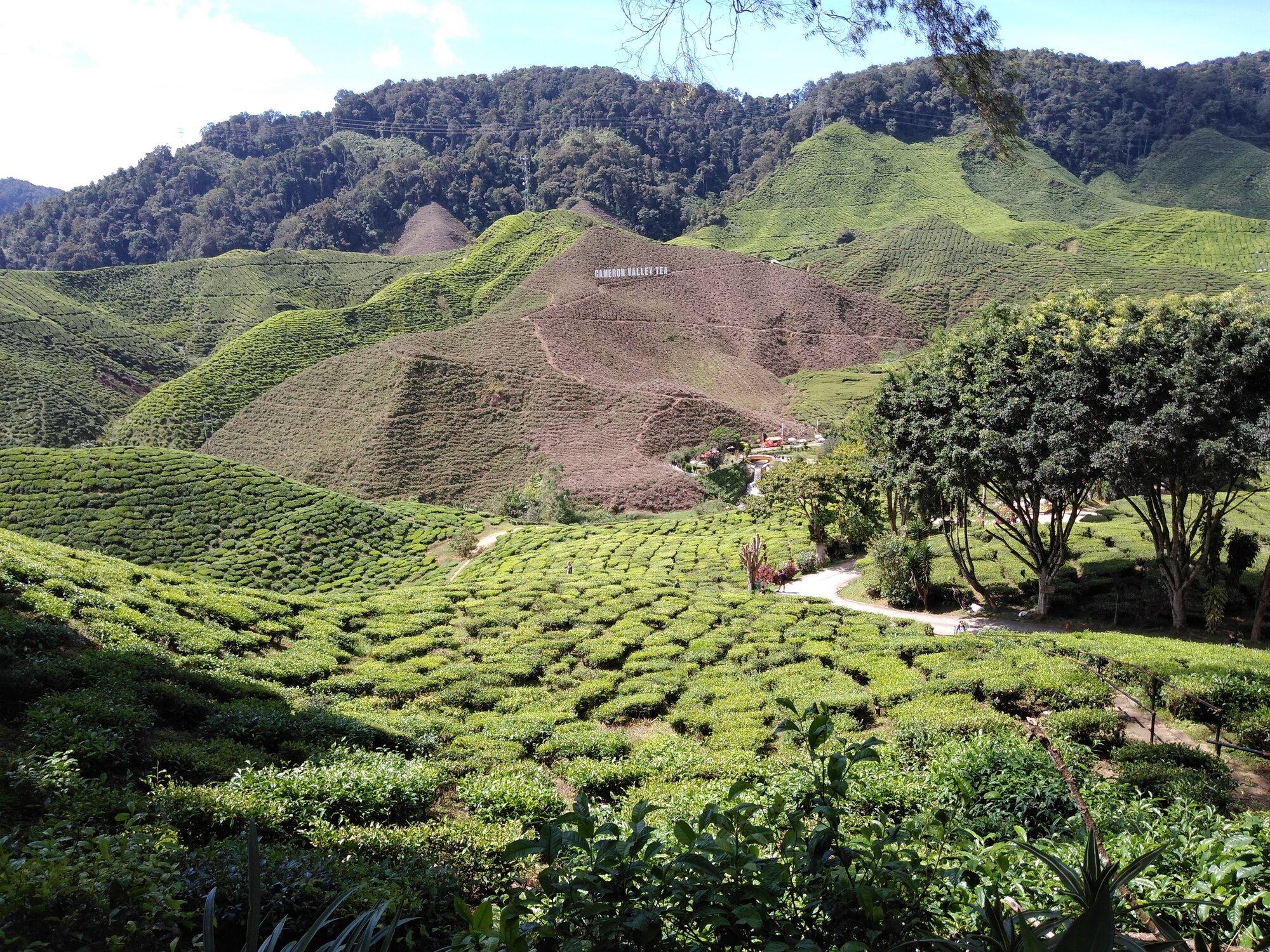 vyhlídka z terasy čajového domu