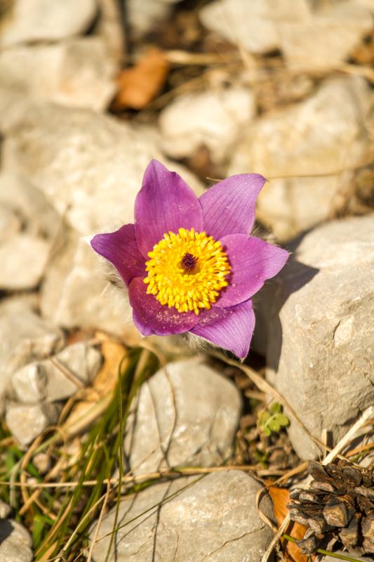první jarní květy