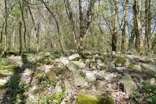 Prírodná rezervácia Starý háj
