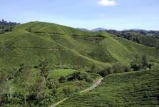 vyhlídka z terasy čajového centra