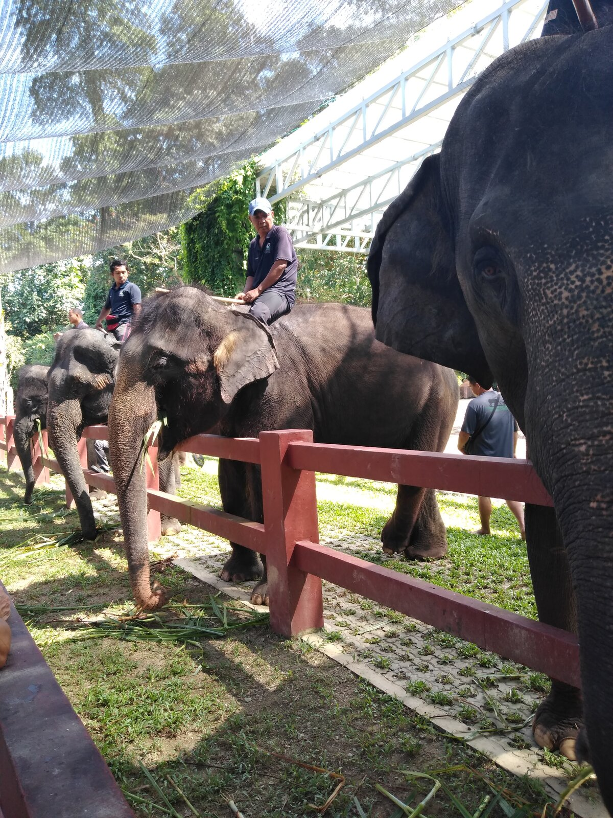 představování slonů